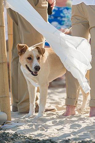 Kayley_Howard_Beach-Wedding_309_014